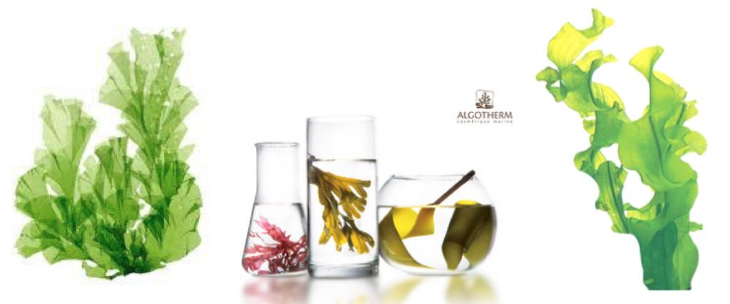 アルゴテルム-海藻